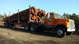 hauling trees off property